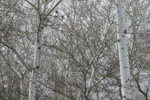 Fotografía de ramas de árboles en Madrid