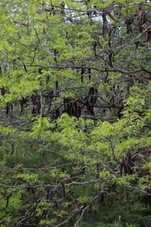Fotografía de árboles en el río Manzanares