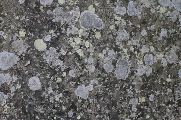 Fotografía de piedra con líquenes y hongos.