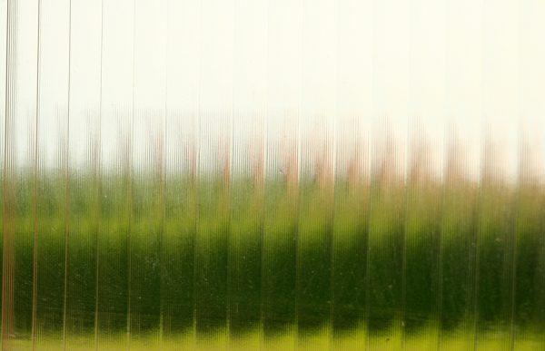 Fotografía de vegetación a través del pavés de un ventanuco