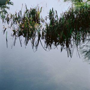 Fotografía de estanque con plantas