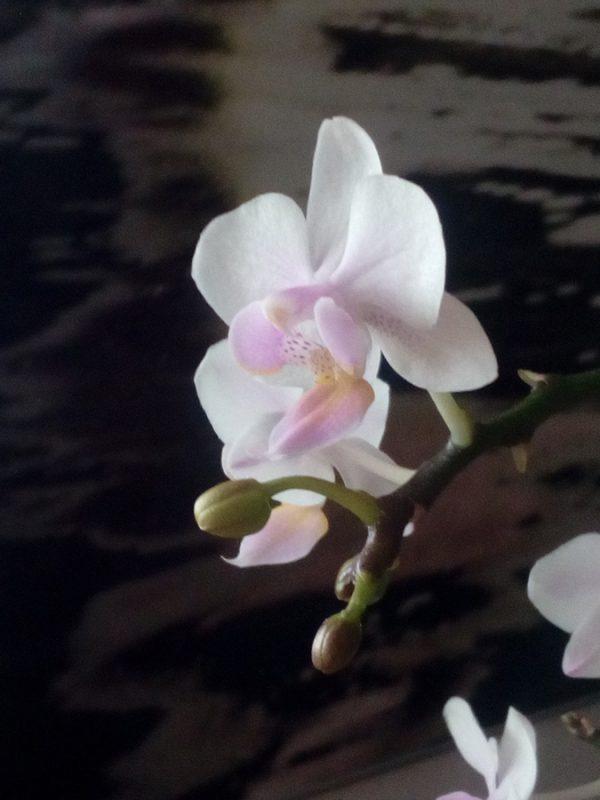 Fotografía de flor y capullos en miniatura de 13x18cm enmarcada