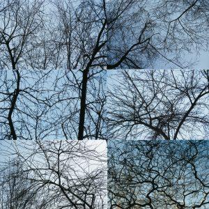fotografía de ramas desnudas