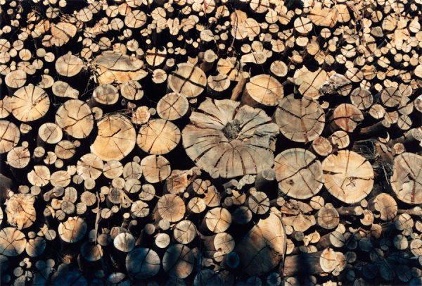 Fotografía de troncos cortados